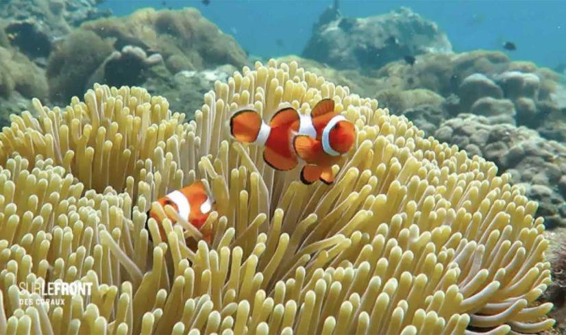 Sur le front - Des coraux
